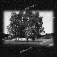 Пейзаж на памятник №Д271 (Три берёзы)