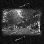 Пейзаж на памятник №Д275 (берёзы вдоль дороги)